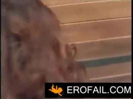 فيديو حصان ينيك حمار
