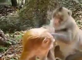 سكس حيوانات مراهق مع بقرة